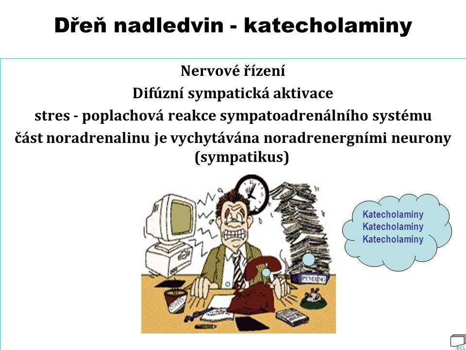 Dřeň nadledvin - katecholaminy Nervové řízení Difúzní sympatická aktivace stres - poplachová reakce sympatoadrenálního systému část noradrenalinu je v