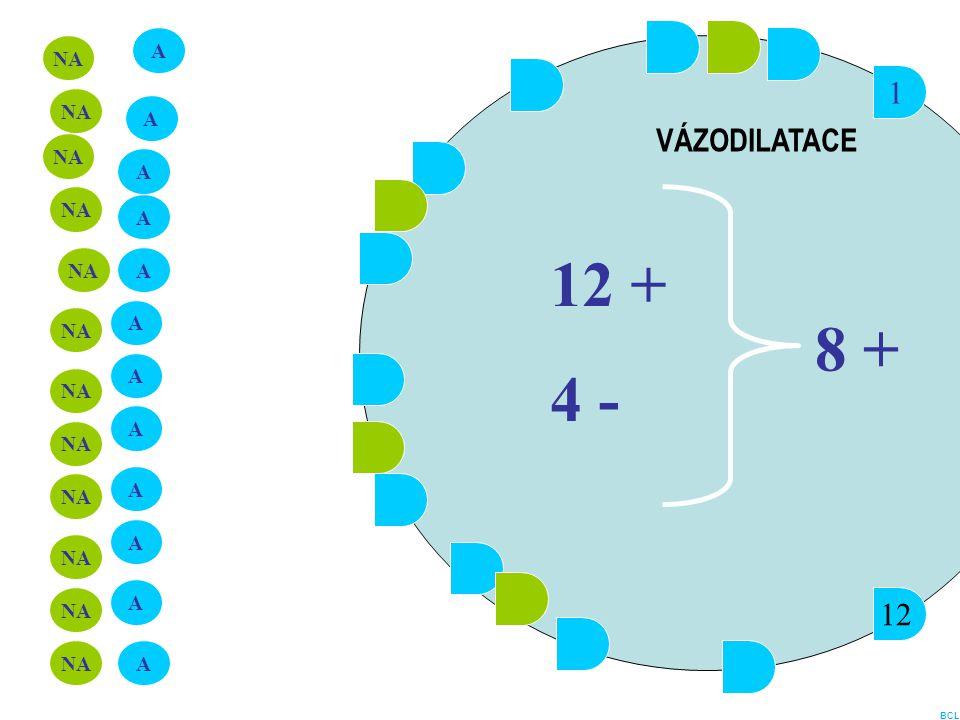 1 12 A NA A A A A A A A A A A A 12 + 4 - 8 + VÁZODILATACE BCL