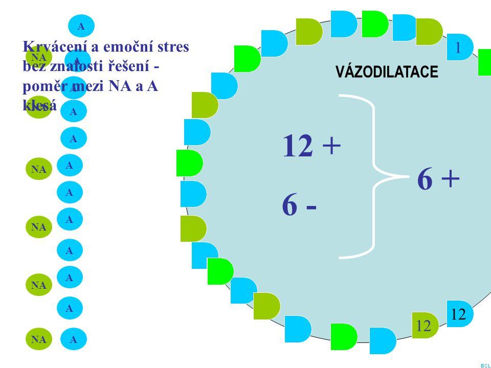 1 12 1 A A A A A A A A A A A A NA 12 + 6 - 6 + VÁZODILATACE Krvácení a emoční stres bez znalosti řešení - poměr mezi NA a A klesá BCL