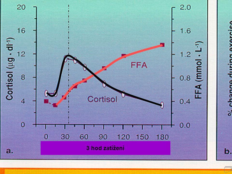 Při zátěži kortizol akceleruje mobilizaci a využití volných mastných kyselin jako energetického substrátu. Nejvyšších hodnot dosahuje plazmatická hlad