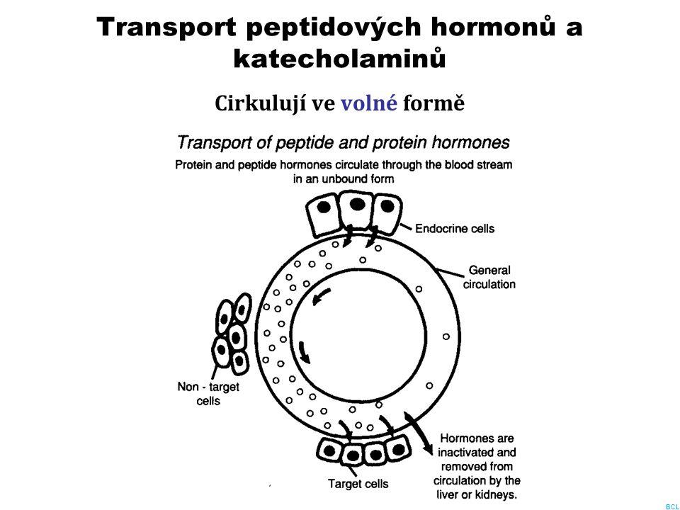 Transport peptidových hormonů a katecholaminů Cirkulují ve volné formě BCL