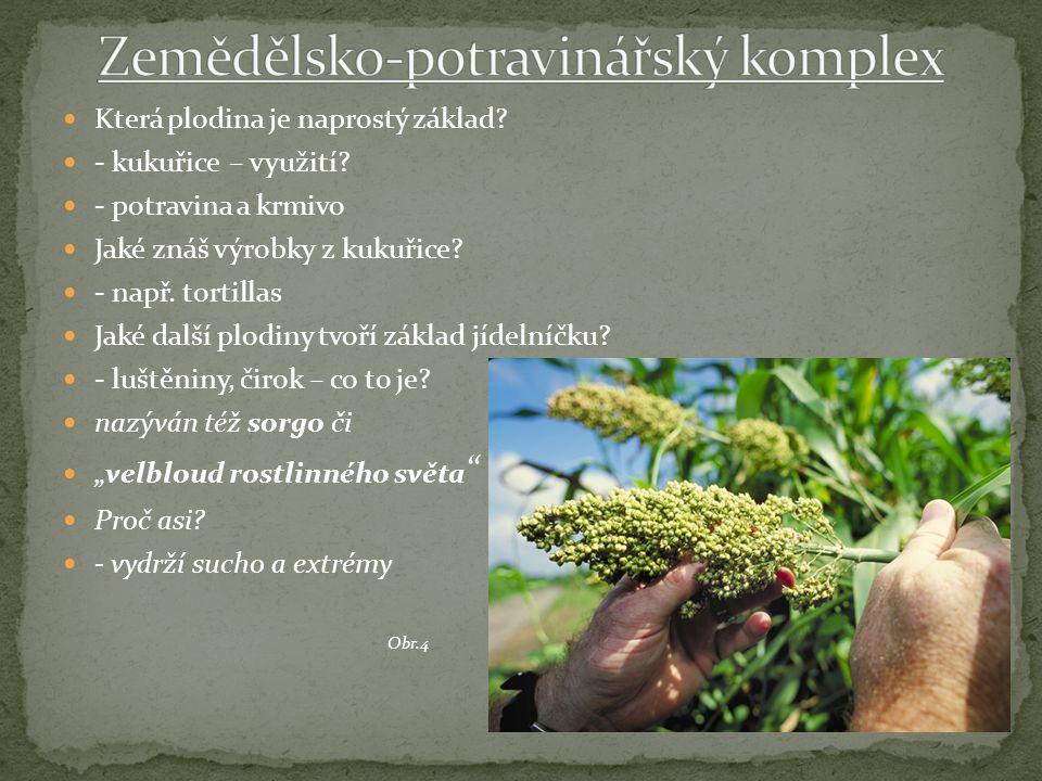 Která plodina je naprostý základ. - kukuřice – využití.