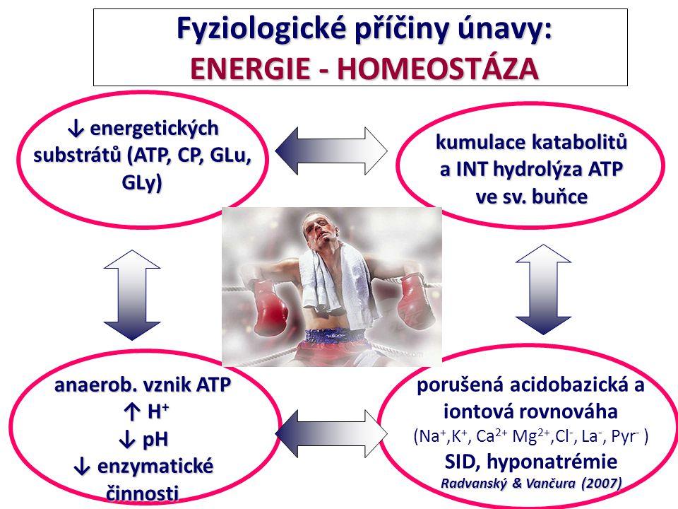 Fyziologické příčiny únavy: ENERGIE - HOMEOSTÁZA Fyziologické příčiny únavy: ENERGIE - HOMEOSTÁZA anaerob. vznik ATP ↑ H + ↑ H + ↓ pH ↓ enzymatické či