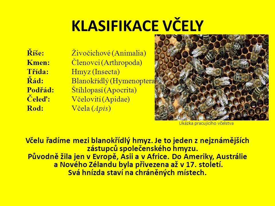 KLASIFIKACE VČELY Říše: Živočichové (Animalia) Kmen:Členovci (Arthropoda) Třída:Hmyz (Insecta) Řád:Blanokřídlý (Hymenoptera) Podřád:Štíhlopasí (Apocri