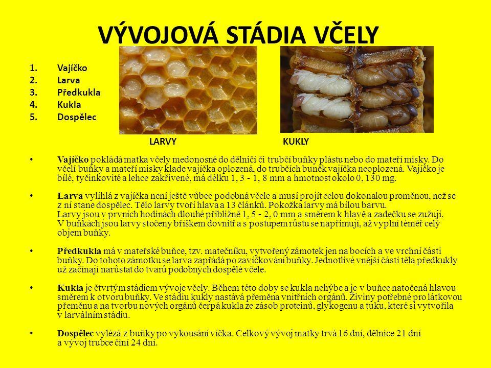 VÝVOJOVÁ STÁDIA VČELY 1.Vajíčko 2.Larva 3.Předkukla 4.Kukla 5.Dospělec LARVY KUKLY Vajíčko pokládá matka včely medonosné do dělničí či trubčí buňky pl