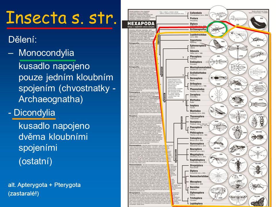 Insecta s. str. Dělení: –Monocondylia kusadlo napojeno pouze jedním kloubním spojením (chvostnatky - Archaeognatha) - Dicondylia kusadlo napojeno dvěm