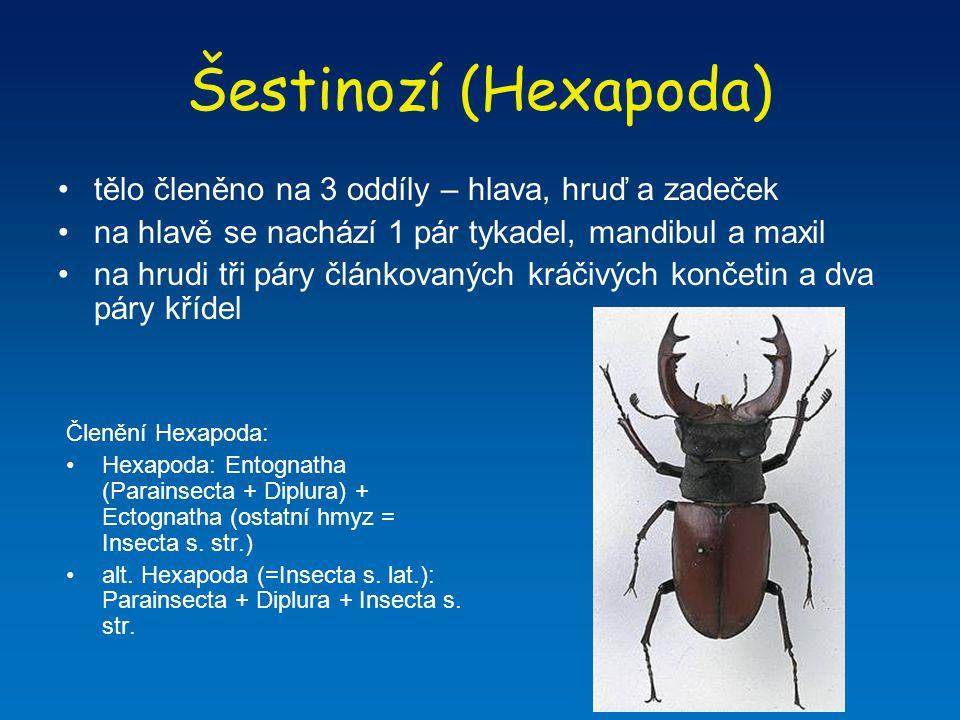 Entognatha: Parainsecta Tetrodontophora bielanensis – larvěnka obrovská Chvostoskoci (Collembola) Entomobrya sp.