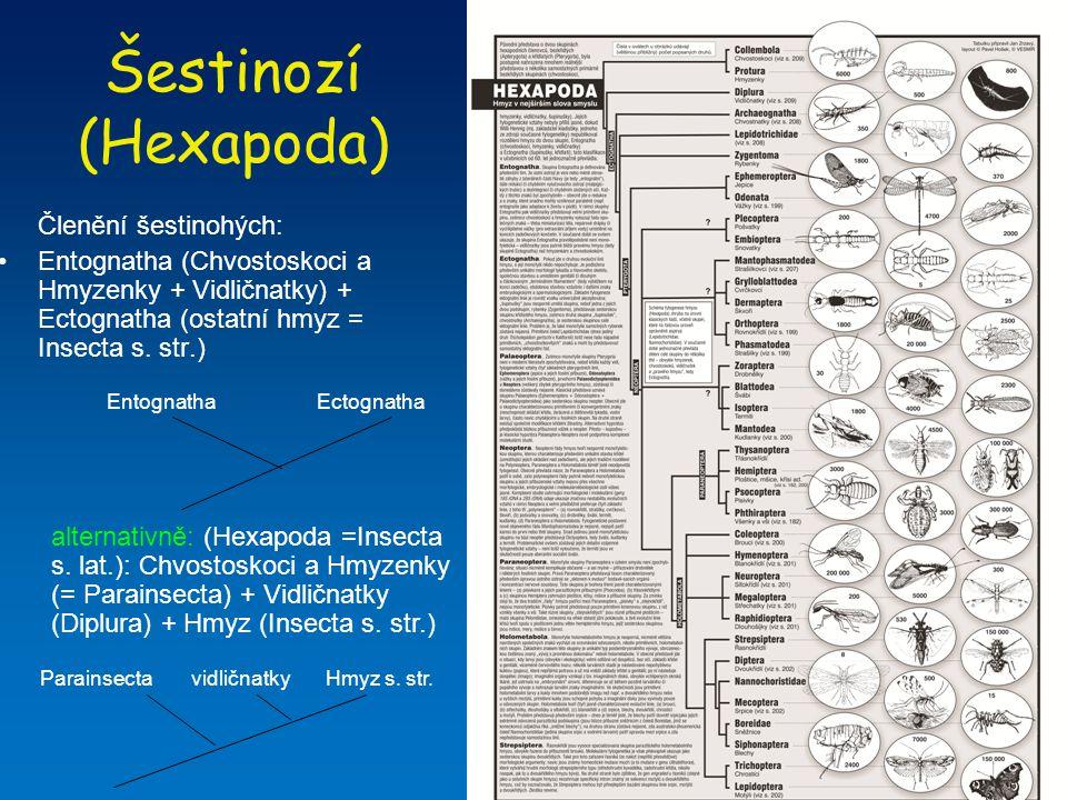 Vidličnatky (Diplura) = štětinovky (Campodeina) + škvorovky (Japygina) –chybí zrakové orgány a pigmentace, bezkřídlí –růžencovitá tykadla, ústní ústrojí uvnitř hlavové kapsule (entognátie), štěty (cerky) na konci zadečku –žijí v půdě, rozmnožování (spermatofor) Entognatha