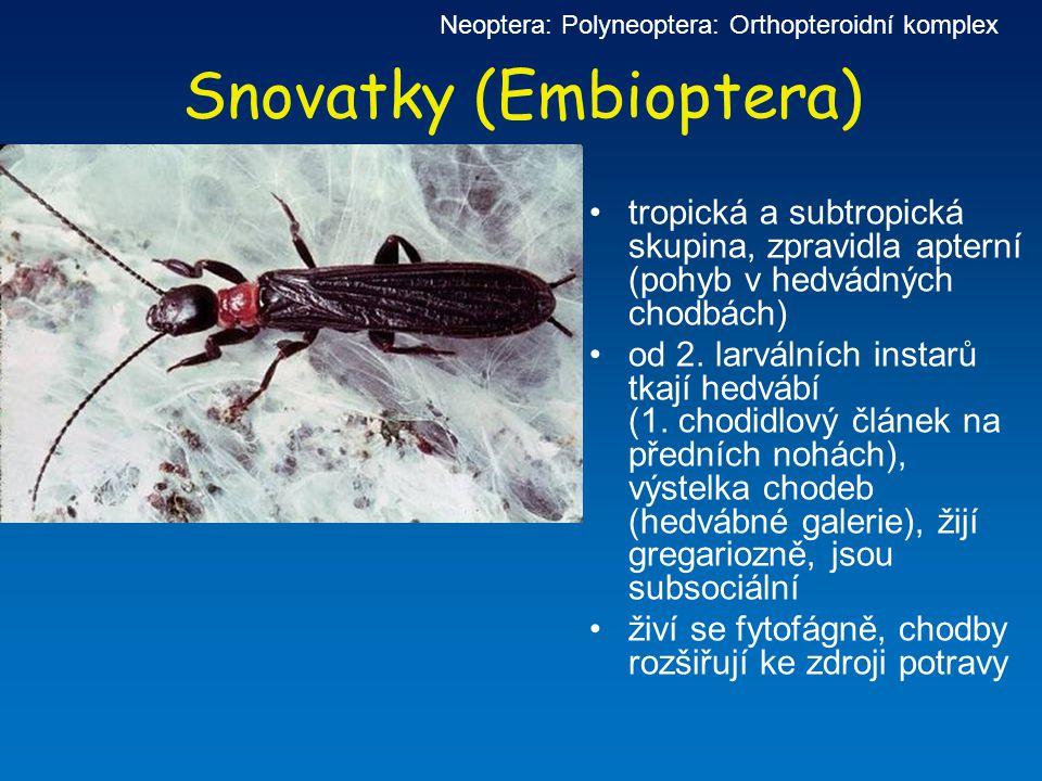 Snovatky (Embioptera) tropická a subtropická skupina, zpravidla apterní (pohyb v hedvádných chodbách) od 2. larválních instarů tkají hedvábí (1. chodi