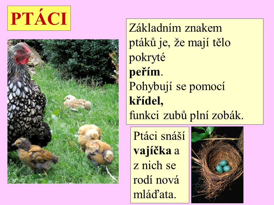 PTÁCI Základním znakem ptáků je, že mají tělo pokryté peřím.
