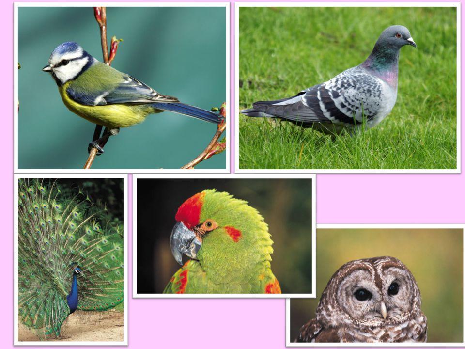 STAVBA TĚLA: křídla trup vole krk hlava zobák nohy