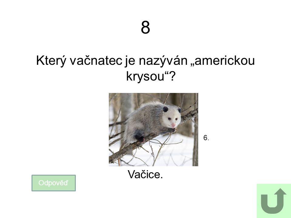 """8 Který vačnatec je nazýván """"americkou krysou""""? 6. Odpověď Vačice."""