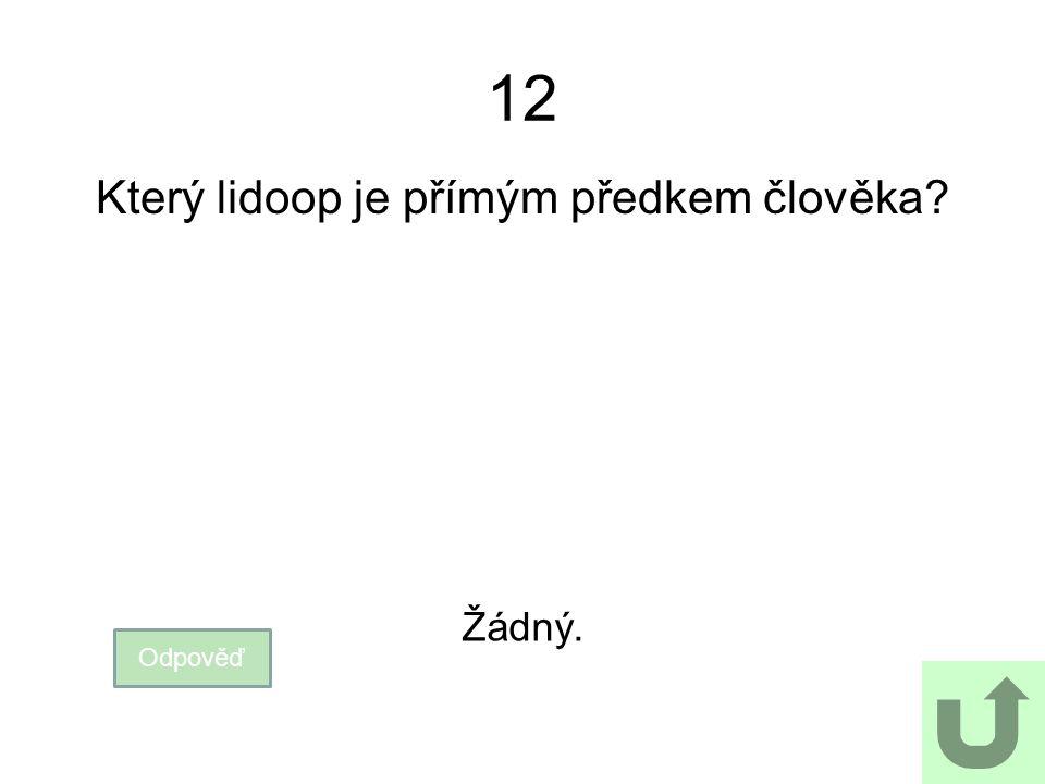 12 Který lidoop je přímým předkem člověka? Odpověď Žádný.