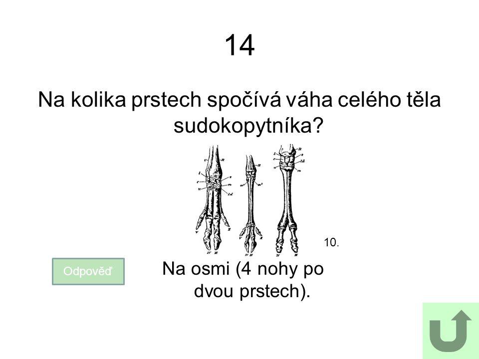 14 Na kolika prstech spočívá váha celého těla sudokopytníka? Odpověď Na osmi (4 nohy po dvou prstech). 10.