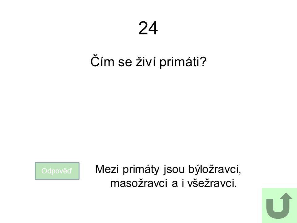 24 Čím se živí primáti? Odpověď Mezi primáty jsou býložravci, masožravci a i všežravci.