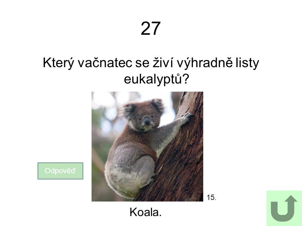 2727 Který vačnatec se živí výhradně listy eukalyptů? Odpověď Koala. 15.