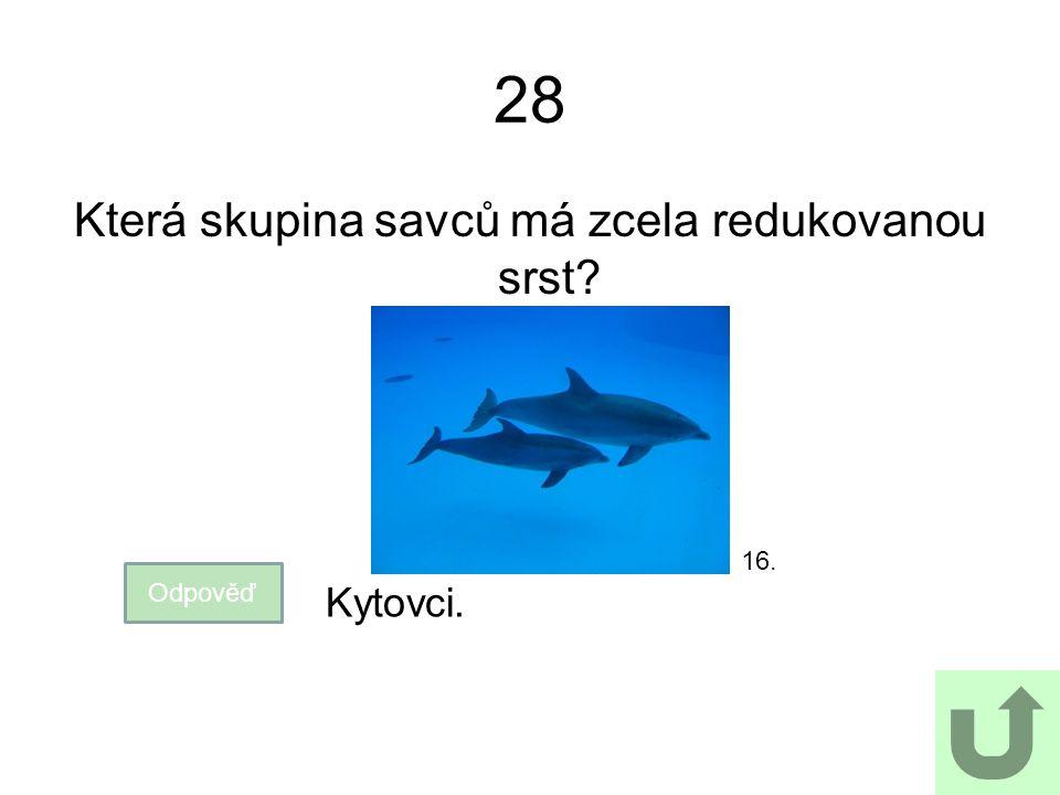 28 Která skupina savců má zcela redukovanou srst? Odpověď Kytovci. 16.