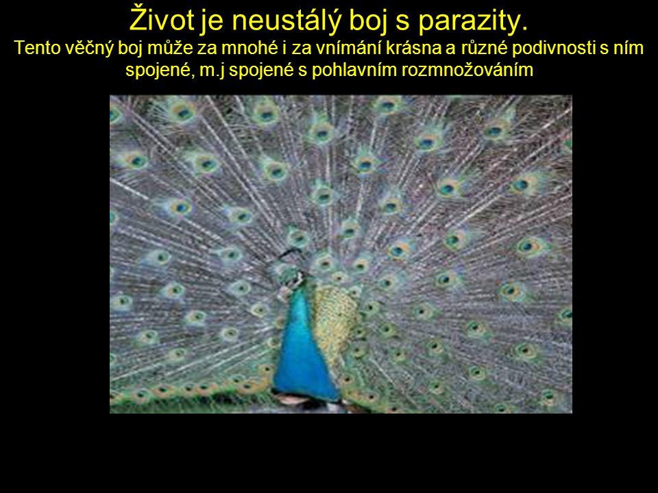 Život je neustálý boj s parazity.