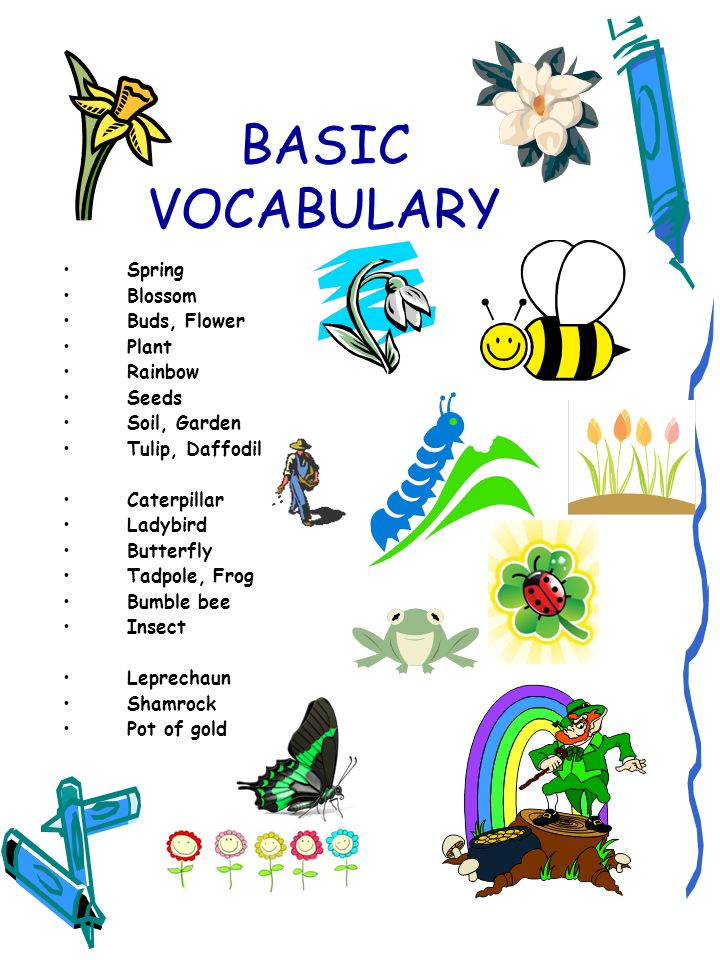 BASIC VOCABULARY Spring Blossom Buds, Flower Plant Rainbow Seeds Soil, Garden Tulip, Daffodil Caterpillar Ladybird Butterfly Tadpole, Frog Bumble bee