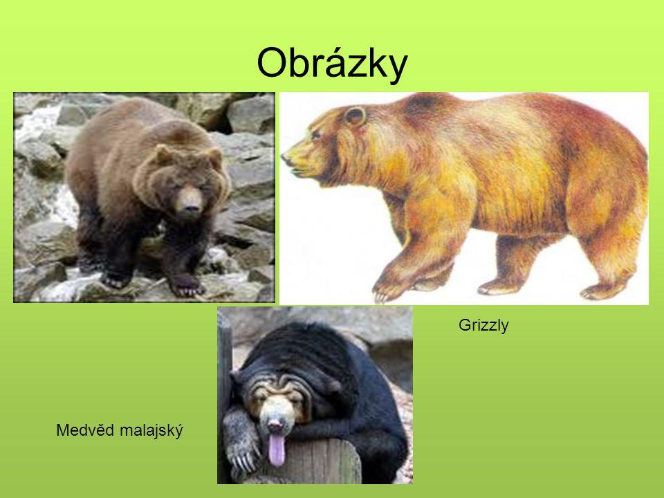 Obrázky grizzly medvěd ušatý Medvěd malajský Grizzly