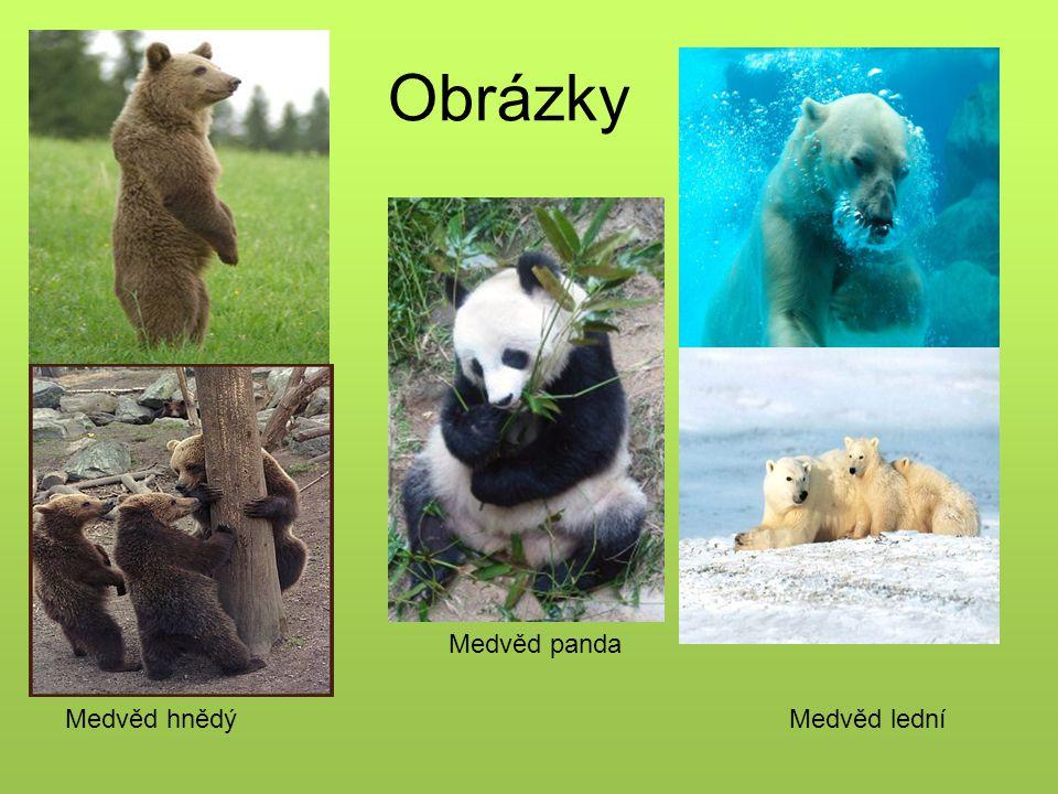 Obrázky Medvěd ledníMedvěd hnědý Medvěd panda