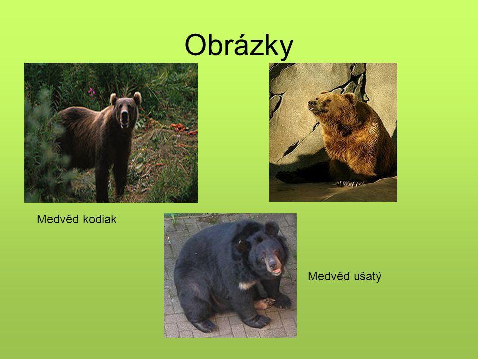 Obrázky Medvěd ušatý Medvěd kodiak