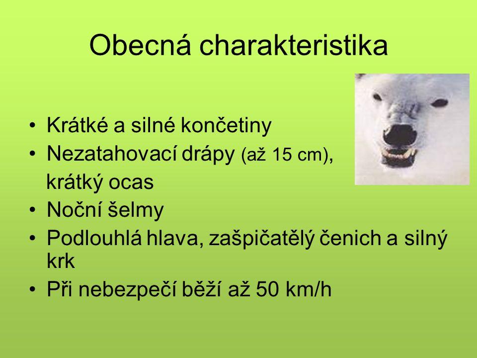 Obecná charakteristika Krátké a silné končetiny Nezatahovací drápy (až 15 cm), krátký ocas Noční šelmy Podlouhlá hlava, zašpičatělý čenich a silný krk