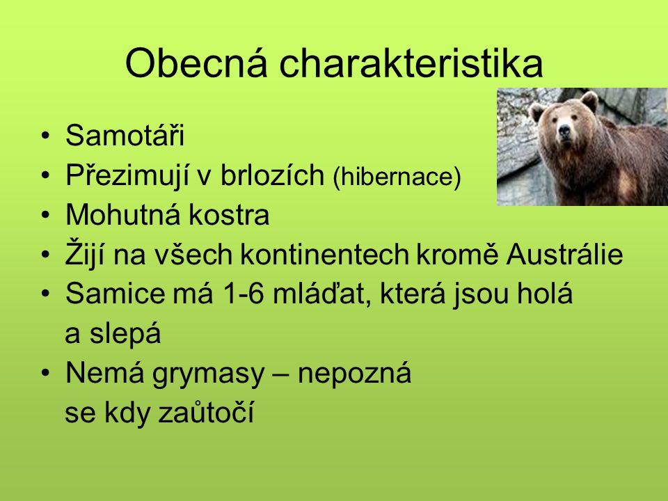 Obecná charakteristika Samotáři Přezimují v brlozích (hibernace) Mohutná kostra Žijí na všech kontinentech kromě Austrálie Samice má 1-6 mláďat, která jsou holá a slepá Nemá grymasy – nepozná se kdy zaůtočí