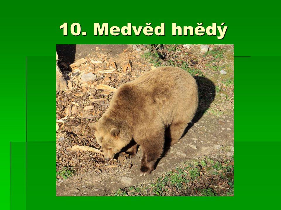 10. Medvěd hnědý