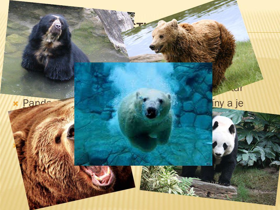  Medvěd brýlatý – méně známy druh  Medvěd hnědý- výskyt na Slovensku  Medvěd grizzly- potrava-lososy, medvěd samotář  Panda velká- stala národním