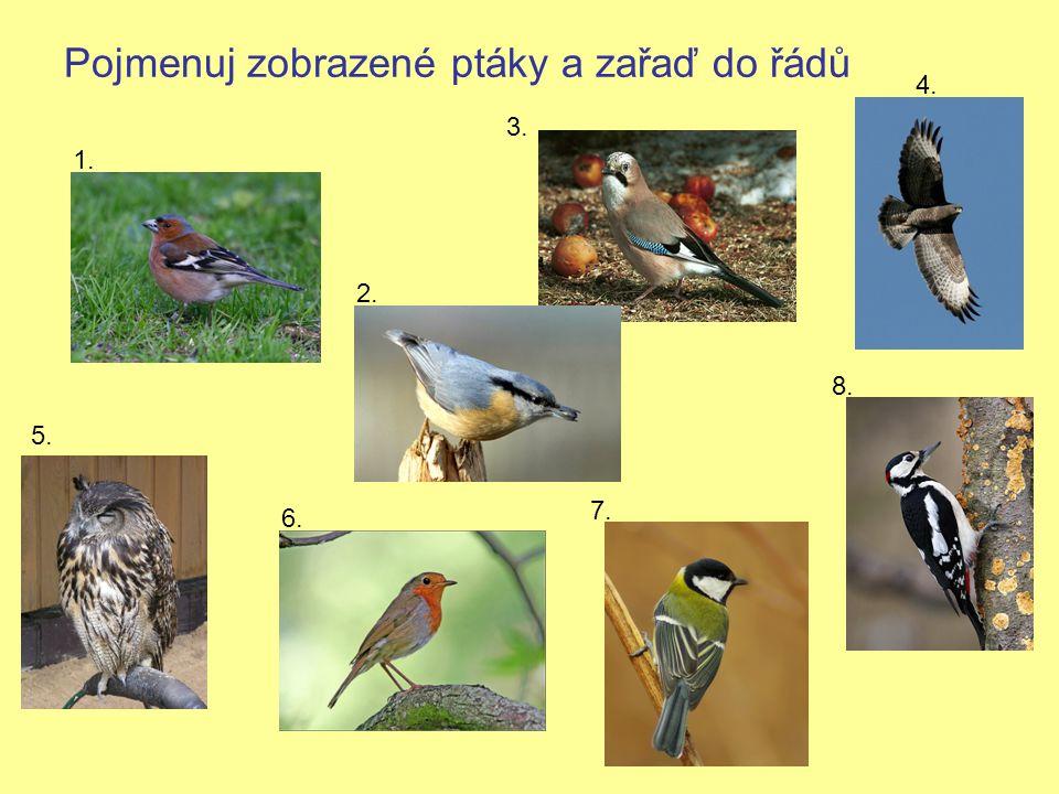 Pojmenuj zobrazené ptáky a zařaď do řádů 1. 2. 3. 4. 5. 6. 7. 8.