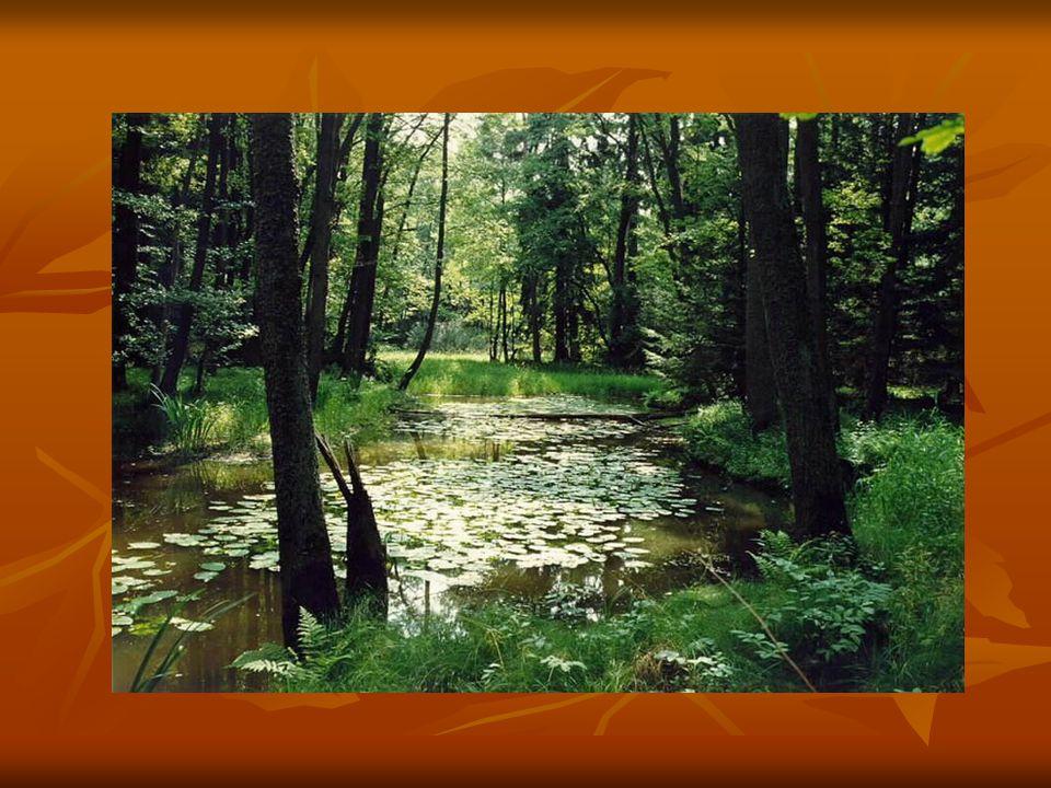 LESNÍ STUDÁNKA Josef Václav Sládek Znám křišťálovou studánku, kde nejhlubší je les, tam roste tmavé kapradí a vůkol rudý vřes.
