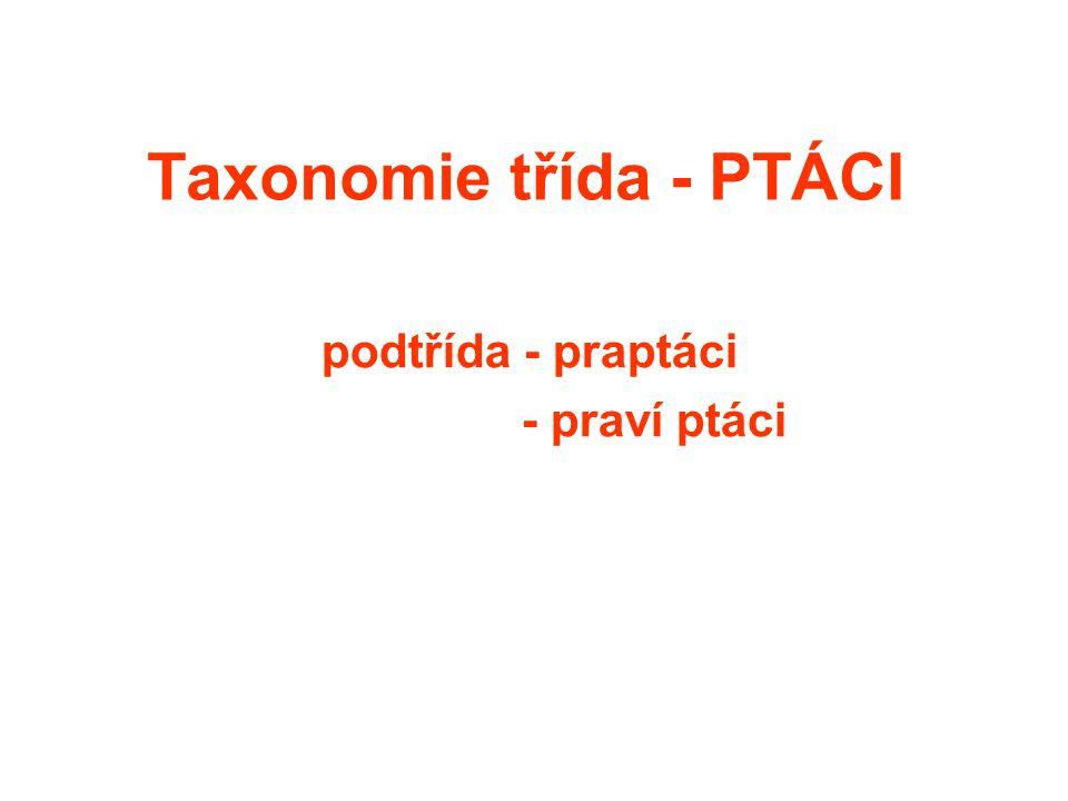 Taxonomie třída - PTÁCI podtřída - praptáci - praví ptáci