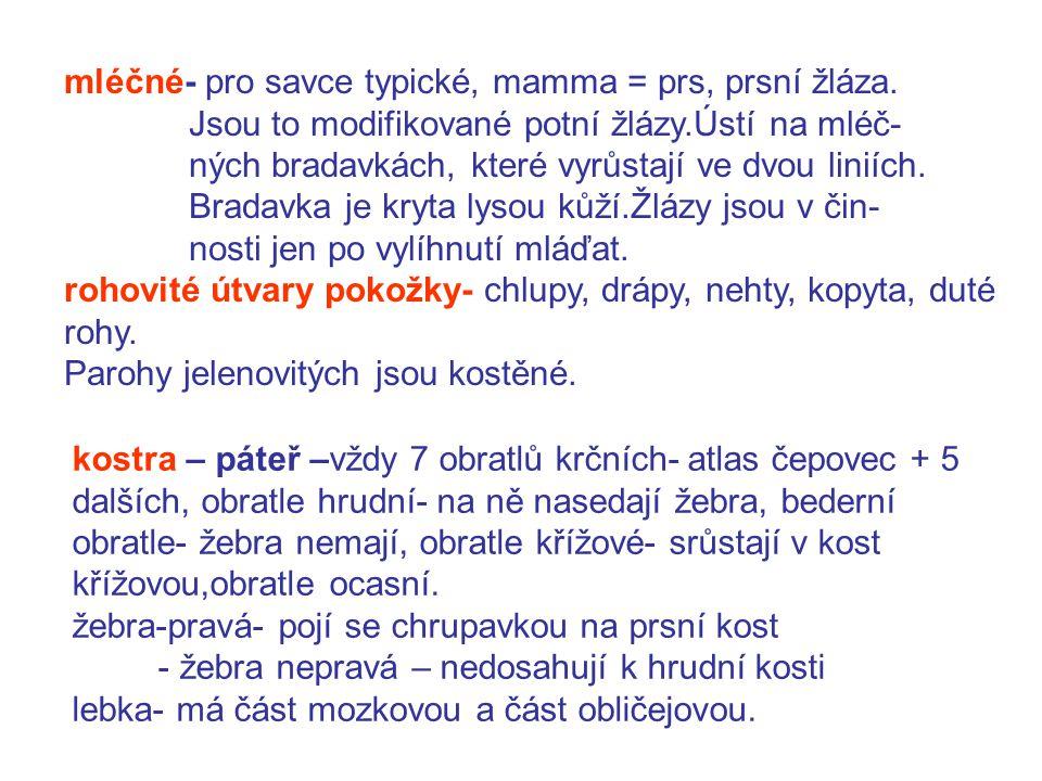 mléčné- pro savce typické, mamma = prs, prsní žláza.