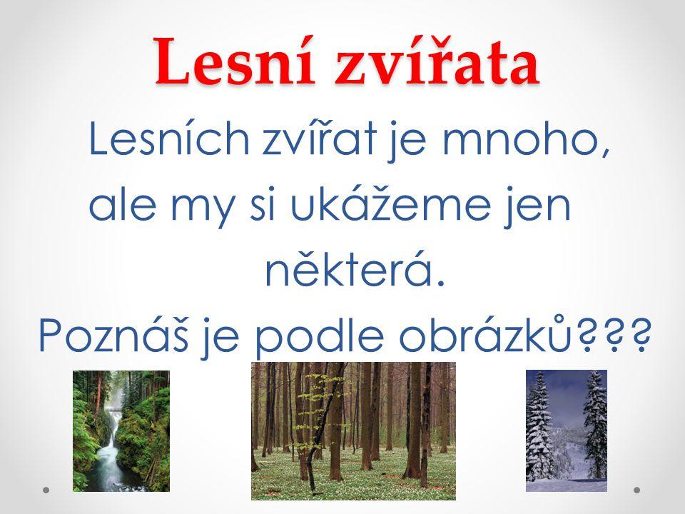 Lesní zvířata Lesních zvířat je mnoho, ale my si ukážeme jen některá. Poznáš je podle obrázků???