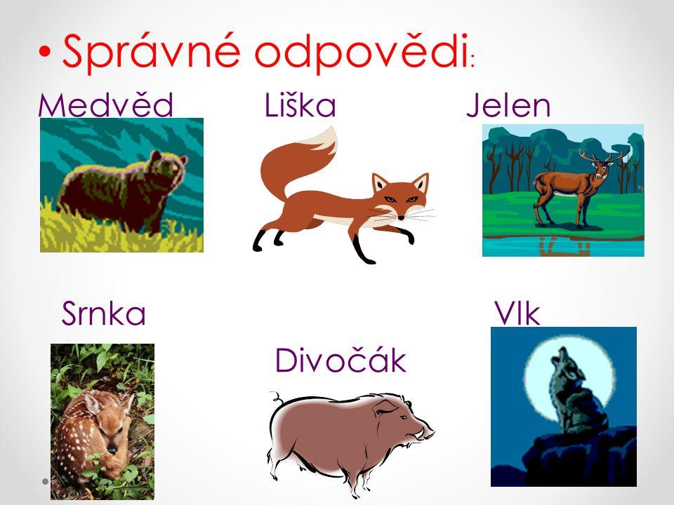 Správné odpovědi : Medvěd Liška Jelen Srnka Vlk Divočák