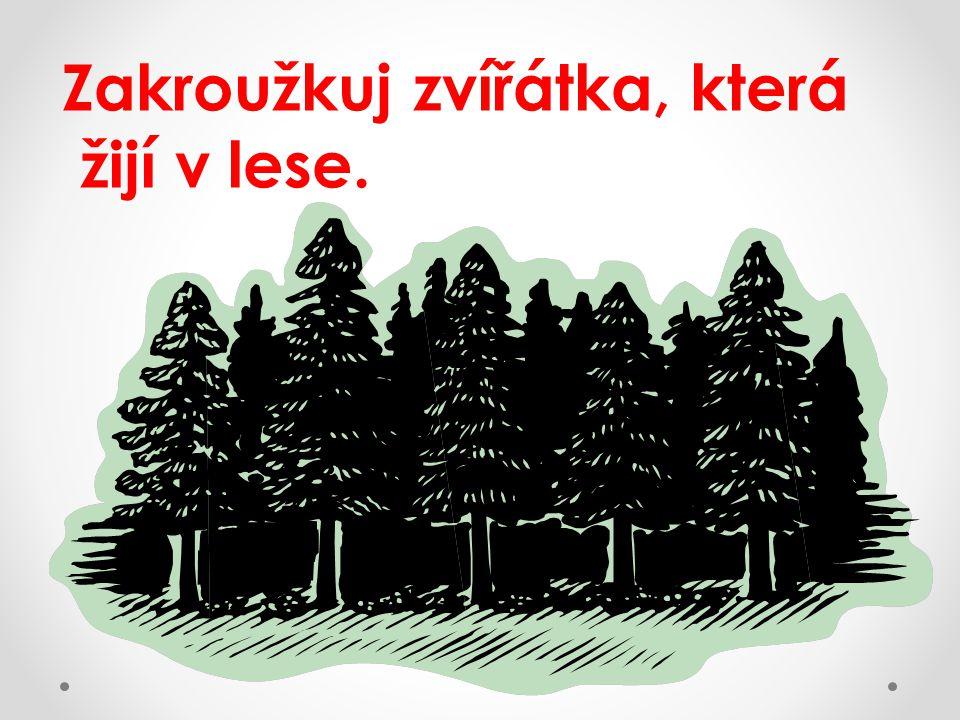 Zakroužkuj zvířátka, která žijí v lese. -