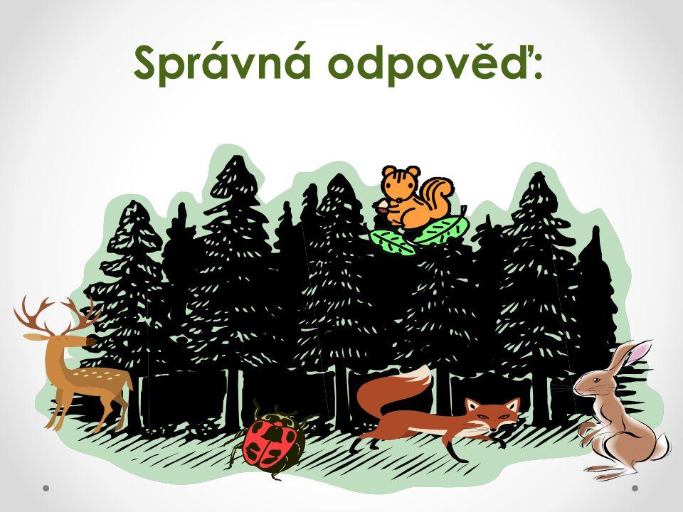 O některých lesních zvířátkách známe pohádky nebo Večerníček.