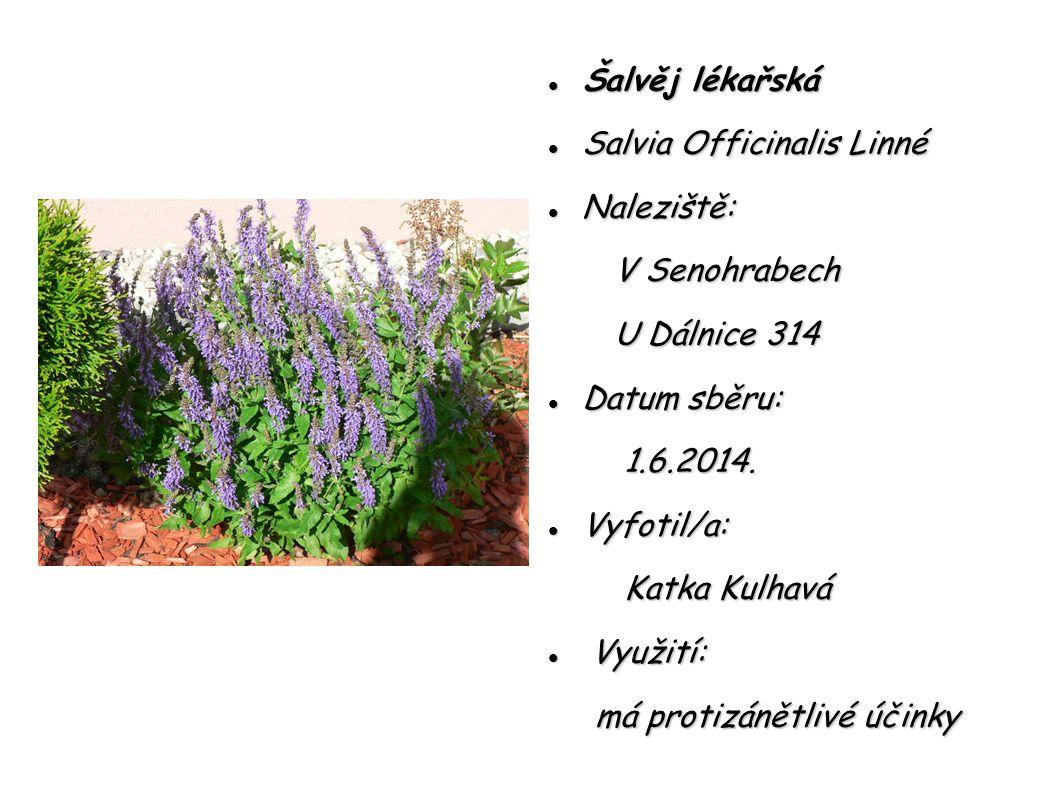 Šalvěj lékařská Šalvěj lékařská Salvia Officinalis Linné Salvia Officinalis Linné Naleziště: Naleziště: V Senohrabech V Senohrabech U Dálnice 314 U Dá