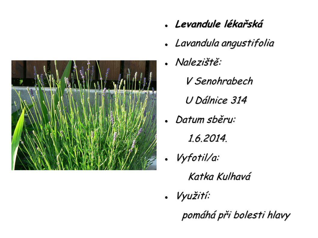 Levandule lékařská Levandule lékařská Lavandula angustifolia Lavandula angustifolia Naleziště: Naleziště: V Senohrabech V Senohrabech U Dálnice 314 U