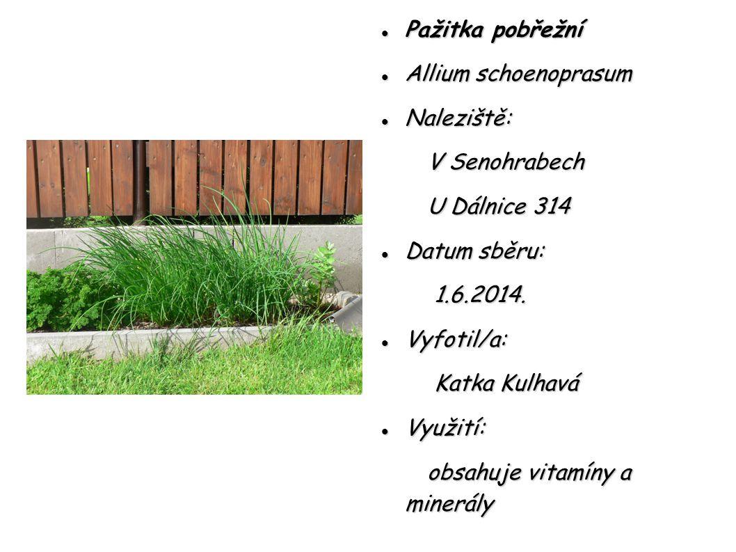 Pažitka pobřežní Pažitka pobřežní Allium schoenoprasum Allium schoenoprasum Naleziště: Naleziště: V Senohrabech V Senohrabech U Dálnice 314 U Dálnice