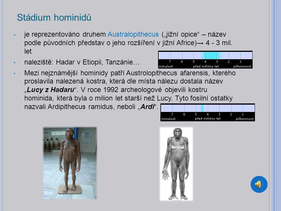"""Stádium hominidů je reprezentováno druhem Australopithecus (""""jižní opice – název podle původních představ o jeho rozšíření v jižní Africe)→ 4 - 3 mil."""