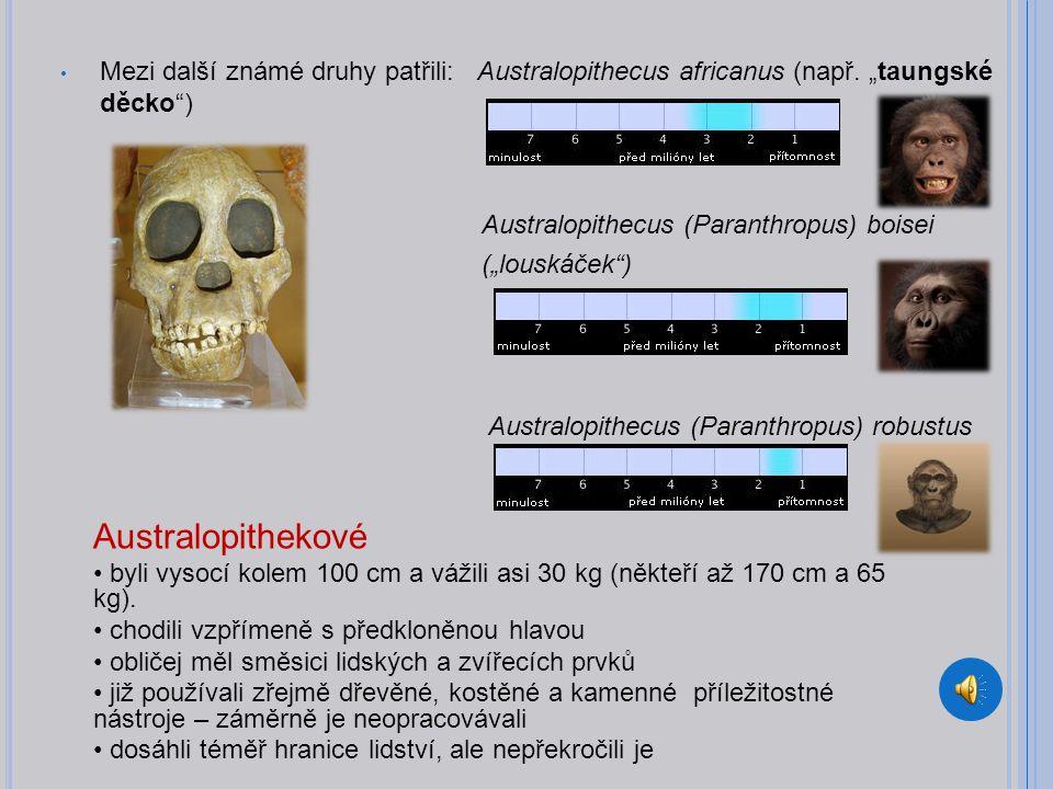 Mezi další známé druhy patřili: Australopithecus africanus (např.