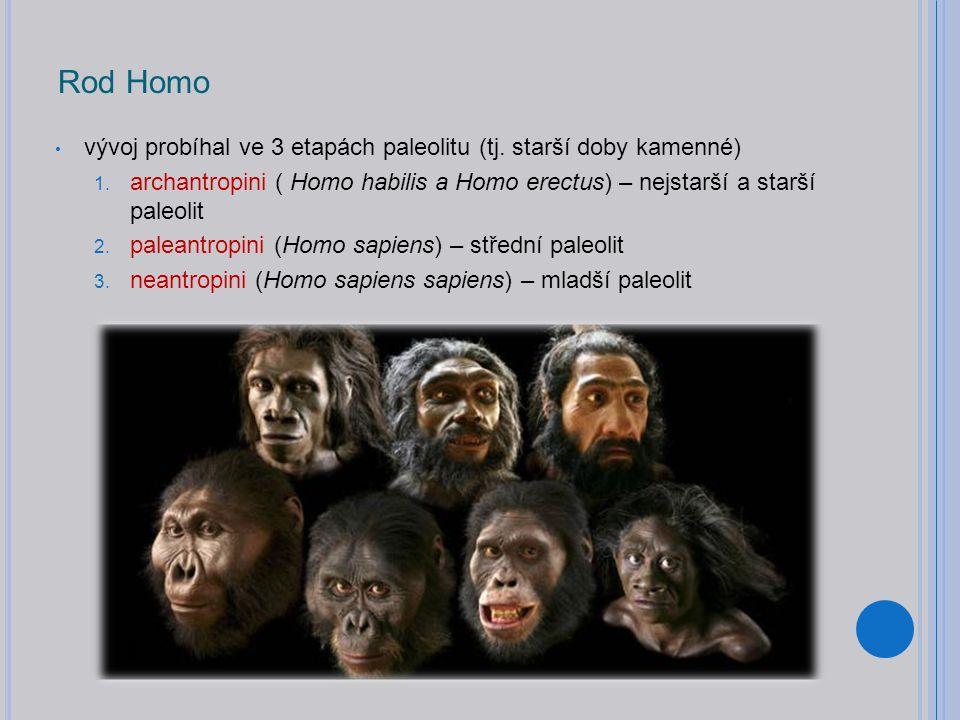 Rod Homo vývoj probíhal ve 3 etapách paleolitu (tj.
