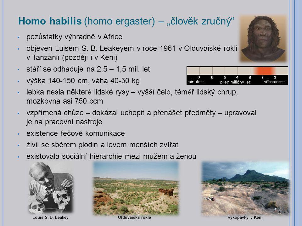 """Homo habilis (homo ergaster) – """"člověk zručný pozůstatky výhradně v Africe objeven Luisem S."""