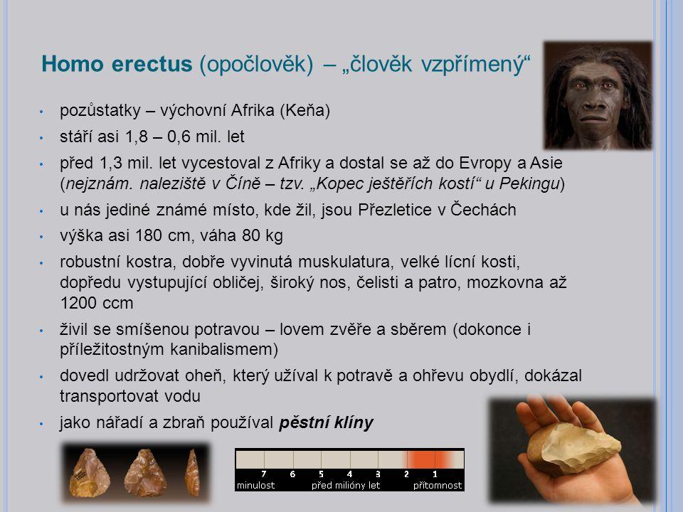 """Homo erectus (opočlověk) – """"člověk vzpřímený pozůstatky – výchovní Afrika (Keňa) stáří asi 1,8 – 0,6 mil."""