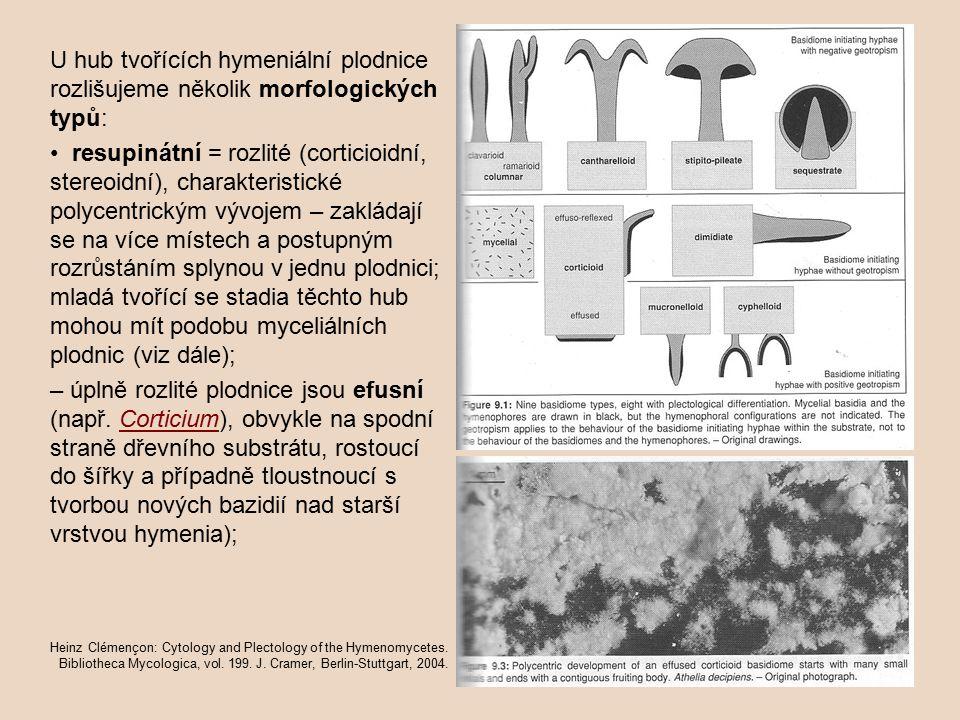 U hub tvořících hymeniální plodnice rozlišujeme několik morfologických typů: resupinátní = rozlité (corticioidní, stereoidní), charakteristické polycentrickým vývojem – zakládají se na více místech a postupným rozrůstáním splynou v jednu plodnici; mladá tvořící se stadia těchto hub mohou mít podobu myceliálních plodnic (viz dále); – úplně rozlité plodnice jsou efusní (např.