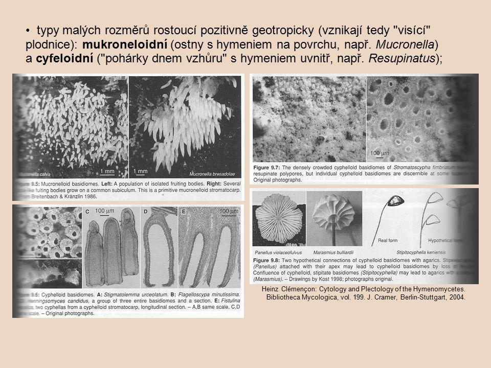 typy malých rozměrů rostoucí pozitivně geotropicky (vznikají tedy visící plodnice): mukroneloidní (ostny s hymeniem na povrchu, např.