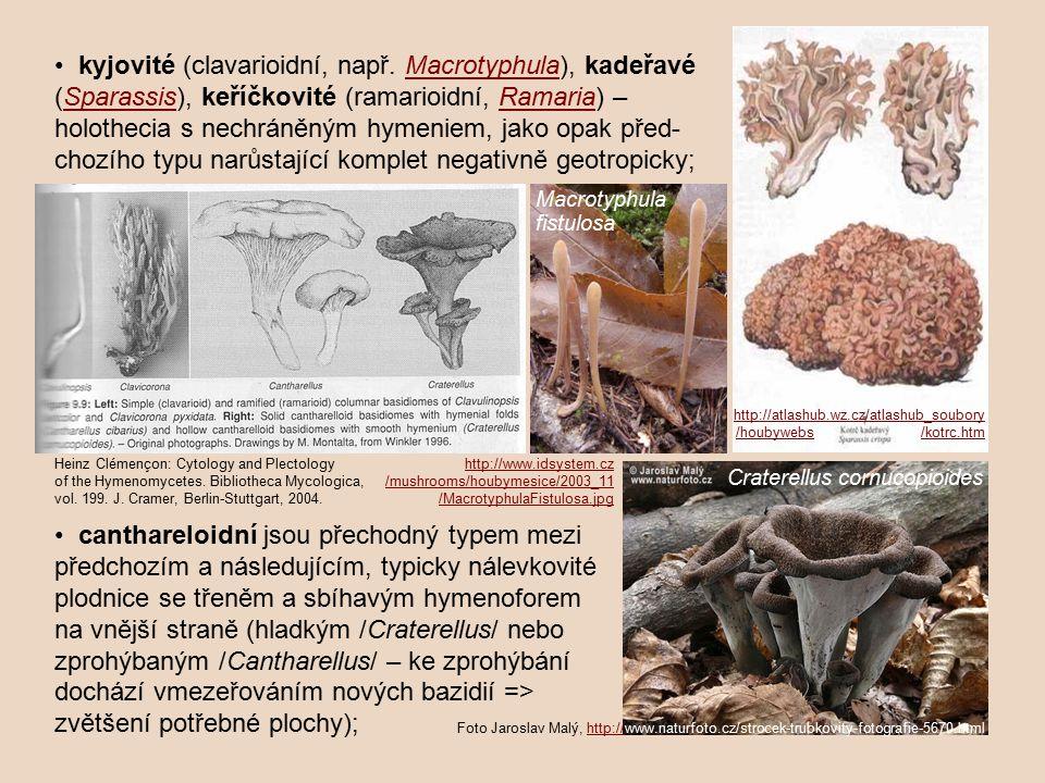 kyjovité (clavarioidní, např.
