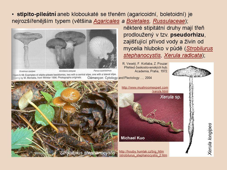 stipito-pileátní aneb kloboukaté se třeněm (agaricoidní, boletoidní) je nejrozšířenějším typem (většina Agaricales a Boletales, Russulaceae);Agaricale